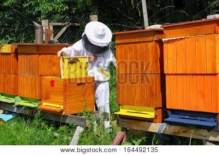 Apiculture - beekeeper in white worksuite wtih lot of bees