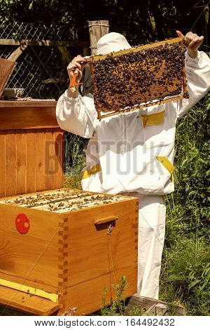 Apiary - beekeeper wtih a lot of bees