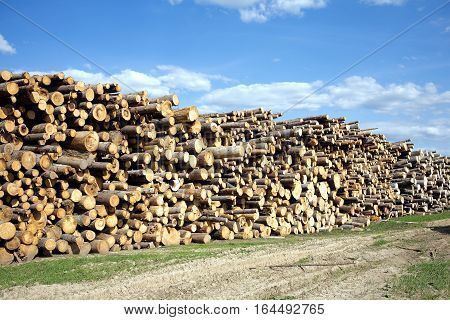 Landscape with many stacked sawed pine logs in piles under beautiful blue sky width clouds
