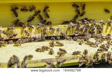 Detail of yellow beehive with lot of bees