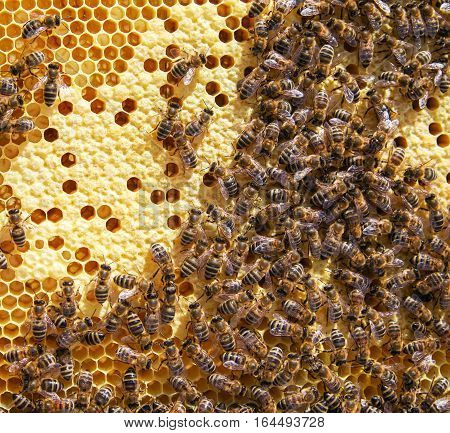 Lot of bees in beehive. Close up view