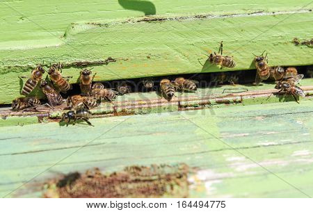 Bees in green beehive. Close up view