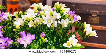 flower close-up bouquet of pink and white alstroemeria holiday panoramic banner vintage background