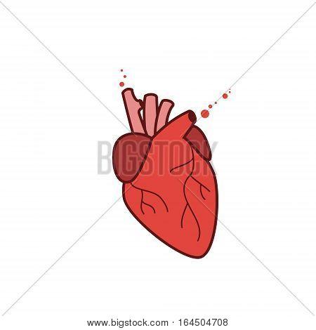 Human heart icon vector realistic illustration isolated