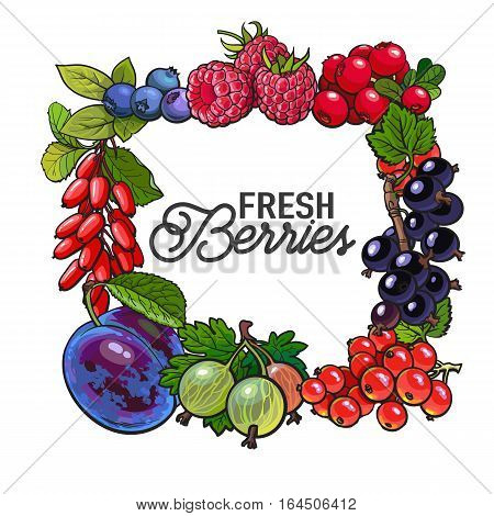 Square frame of garden berries with place for text inside, sketch style illustration isolated on white background. Blueberry, raspberry, current, cherry, plum frame, banner, poster, leaflet design