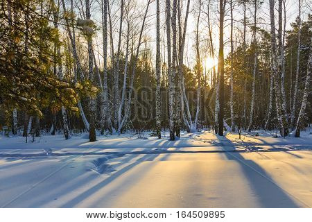 Winter landscape with snow covered forest. Novosibirsk oblast Siberia Russia
