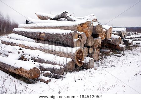 Front view of stacked sawed pine logs in a pile under snow in overcast winter day