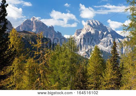 View of larch wood and Le Tofane Gruppe Dolomiti Italy
