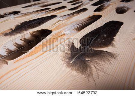 Many falconry feather on bright wooden background.