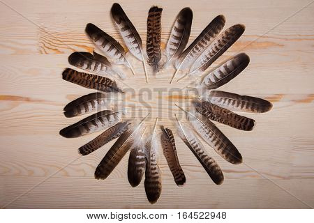 Circle falconry feathers on light wooden background.