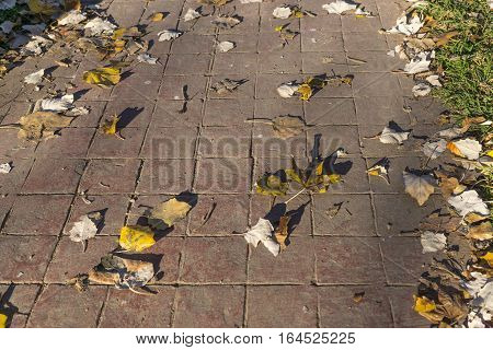 stamped concrete pavement outdoor flooring natural exterior with leaves and grass, decorative appearance of tiling, mimics colors and textures of material pavers, red tiles pattern perspective