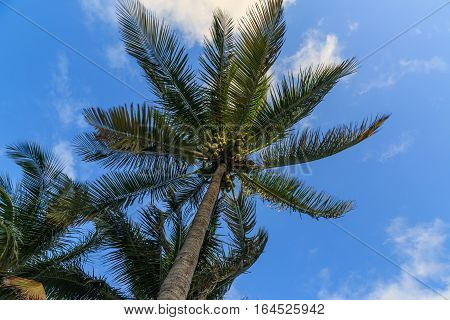 Single palm tree with partly cloudy sky.