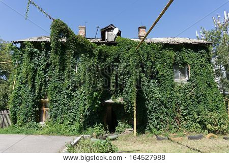 house is overgrown with green ivy in Samara. House covered with green plant of grape