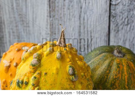 Different kind of pumpkins and winter squashes on white wooden background