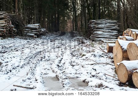 Stacked logs in the forest. Everything is covered with snow. The road with deep tracks goes into the forest.