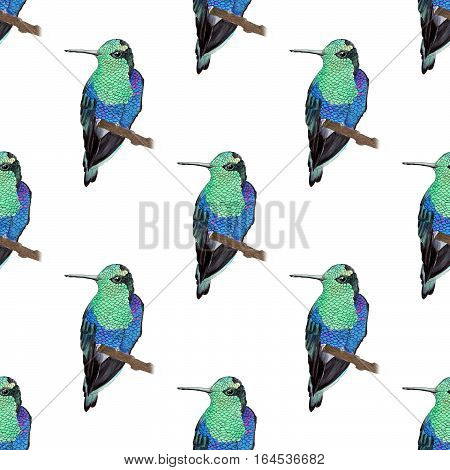 Hummingbird. Seamless pattern with hand-drawn tropical bird - colibri on the white background. Real watercolor illustration