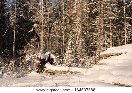 Trees Covered With Snow On A Sunny Frosty Day, Russia.