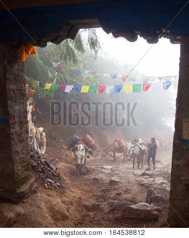 TAKSINDU LA PASS NEPAL 20th MAY 2016 - caravan of mules and nepalese going through gate in Taksindu la pass on the trekking trail from Jiri Bazar to Lukla Nepal
