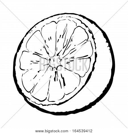 Realistic colorful hand drawn half of ripe, juicy orange, sketch style vector illustration isolated on white background. black and white Hand drawing of unpeeled orange half on background