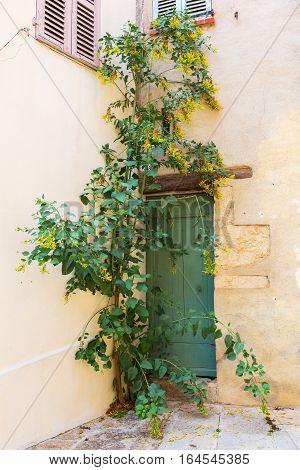 With Climbing Plants Overgrown Door In Provence