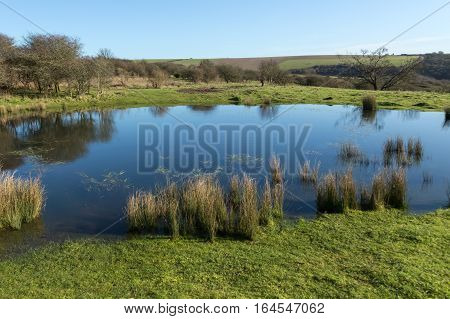South Downs pond, natural watering hole. Took this shot whilst walking on the South Downs on a bright sunny January Day.