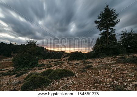 Storm clouds in a bleak landscape at sunset in the National Park of Ifrane, Morocco. in the foreground is some moss.