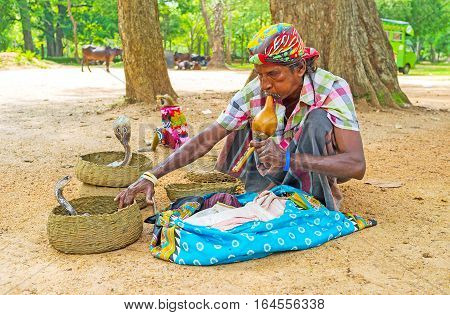 ANURADHAPURA SRI LANKA - NOVEMBER 26 2016: The snake charmer shows his skills touching cobras during playing on pungi on November 26 in Anuradhapura.