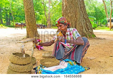 ANURADHAPURA SRI LANKA - NOVEMBER 26 2016: The show of snake charmer holding the cobra and playing on pungi to mesmerize the snakes on November 26 in Anuradhapura.