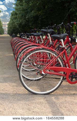Many red bikes standing outdoor in summer day closeup