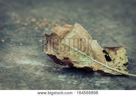 Dry yellow leaf in winter season on mountain stone