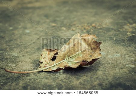 Dry yellow leaf in winter season on mountain stone