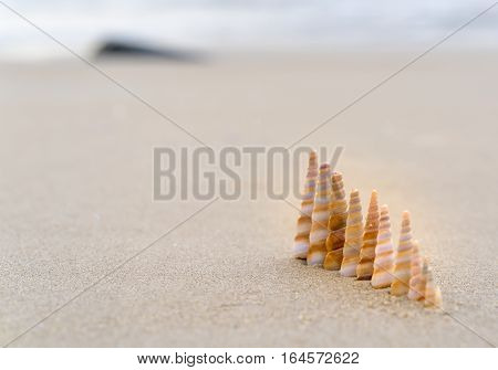 Seashells queuing on the beach in beautiful sunny morning