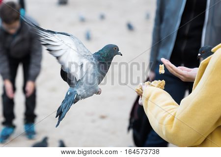 picture of a woman with feed and a flying dove