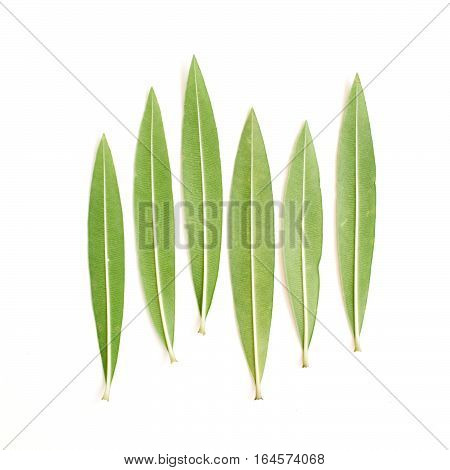 Green tree leaves. Flat lay top view. Nature concept
