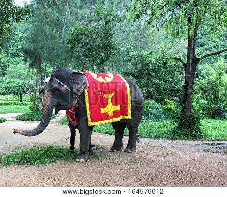 the elephant, the back of which is covered with a cloth red yellow, stands amid tropical greenery