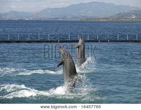 Twin Dolphin Show