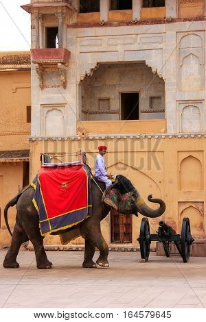 Amber, India - March 1: Unidentified Man Rides Decorated Elephant In Jaleb Chowk On March 1, 2011 In