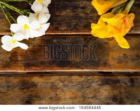 Yellow Canna and Plumeria flower on wooden background