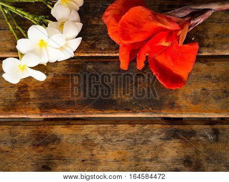 Red Canna and Plumeria flower on wooden background
