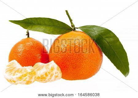 Fruits of clementine isolated on white background.