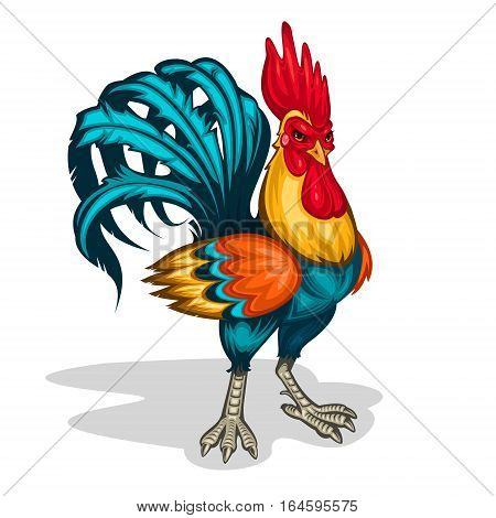 color illustration of a rooster standing half-turned. Cock symbol 2017 year