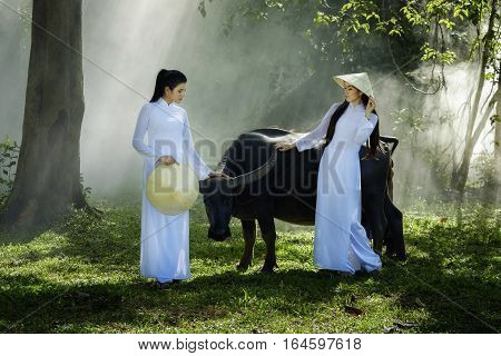 Two Vietnam girls in Ao Dai dress with buffalo Vietnam traditional dress Ao Dai is famous traditional costume for woman in Vietnam.