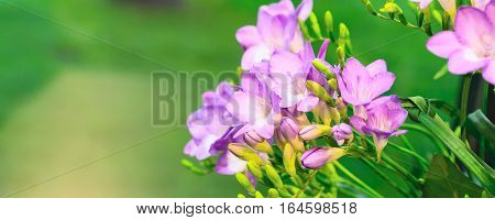 flower bouquet of pink alstroemeria on green banner panoramic holiday background with copy space