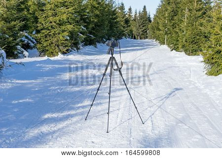 Camera on tripod stands on the forest path in winter