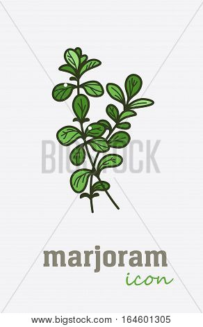 Sweet Marjoram vector icon. Vegetable green leaves. Greenery. Culinary herb spice for cooking, medical, gardening design. Organic product flavor ingredient for label, sign, illustration
