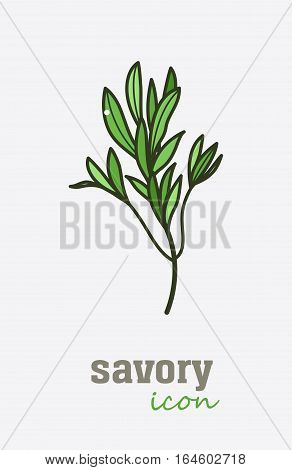 Savory vector icon. Vegetable green leaves. Greenery. Culinary herb spice for cooking, medical, gardening design. Organic product flavor ingredient for label, sign, illustration