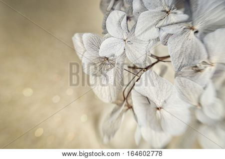 Close up of dry flowers of Hydrangea shoot with lensbaby. Strong distortion and shallow depth of field