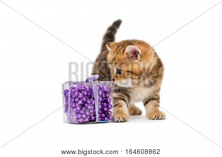 Little kitten British and Christmas toys isolated on white