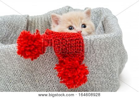 Little kitten in box with knitted scarf isolated on white.