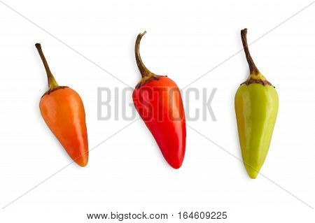 Small sort of chili pepper habanero or jalapeno isolated on white background. Closeup image of ideal hot spicy vegetables. Healthy natural organic food